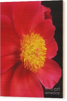 Peony 2 Wood Print by Heather L Wright