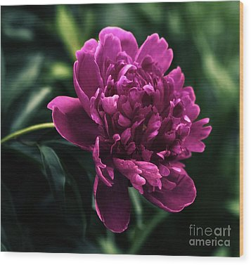 Wood Print featuring the photograph Peony 2014 by Marjorie Imbeau
