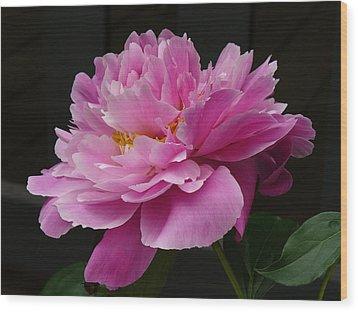 Peony Blossoms Wood Print by Lingfai Leung