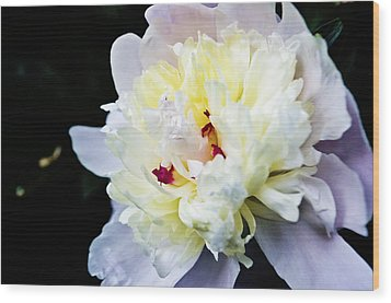 Peony Evening Wood Print