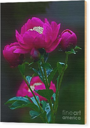 Peony Glow Wood Print by Robert Pilkington