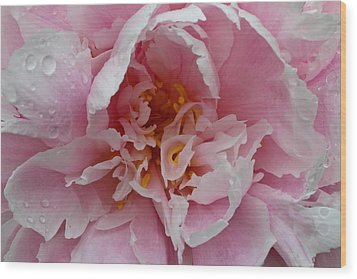 Wood Print featuring the photograph Peony Love by Julie Andel