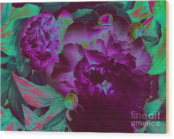 Peony Passion Wood Print by First Star Art