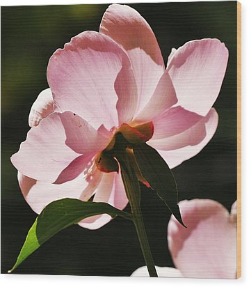 Wood Print featuring the photograph Peony Shines... by Al Fritz
