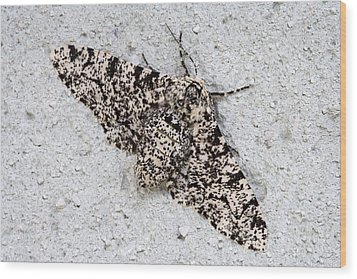 Peppered Moth Wood Print by Power And Syred
