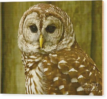 Wood Print featuring the photograph Perched by Alice Mainville