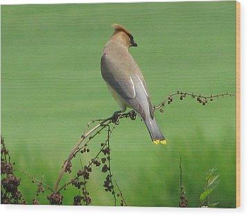 Perched On A Twig Wood Print by Selma Glunn