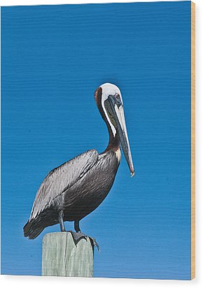 Perched Wil 391 Wood Print by G L Sarti