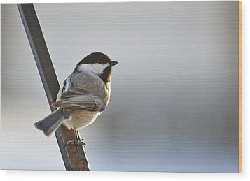 Perching Black Cap Wood Print