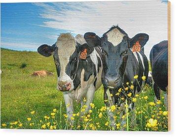 Percy's Holsteins Wood Print