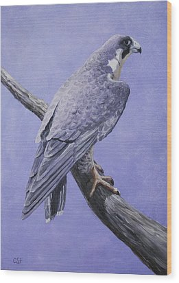 Peregrine Falcon Wood Print by Crista Forest