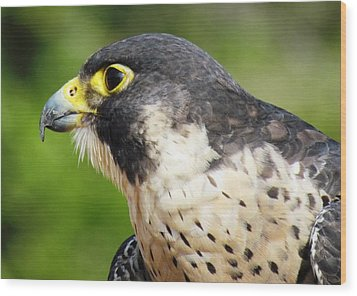 Wood Print featuring the photograph Peregrine Falcon by Cynthia Guinn