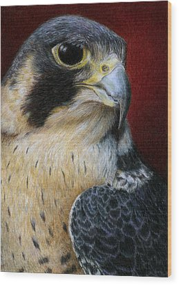 Peregrine Falcon Wood Print by Pat Erickson