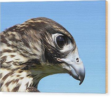 Peregrine Falcon Tashunka Wood Print by Christina Rollo