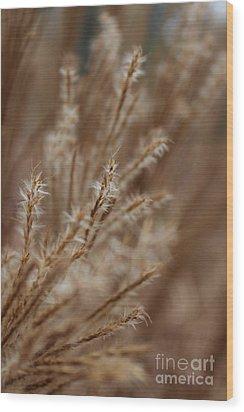 Perennial Grass Wood Print by Arlene Carmel