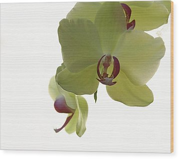 Perfect Moments Orchid  Wood Print by Inspired Nature Photography Fine Art Photography