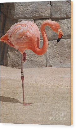 Perfect Pink Flamingo Wood Print by DejaVu Designs