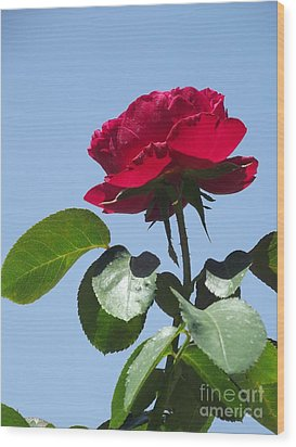 Perfect Red Rose Wood Print by Cheryl Hardt Art