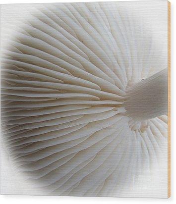 Perfect Round White Mushroom Wood Print by Tina M Wenger