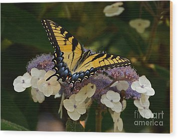 Perfect Tiger Swallowtail Butterfly Wood Print by Byron Varvarigos