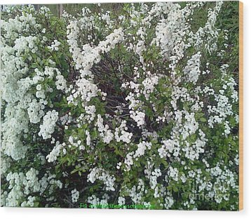 Perfect White Spring Blossoms Wood Print by PainterArtist FIN