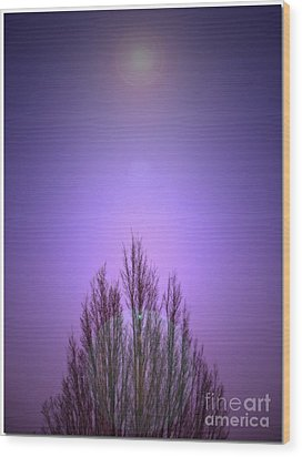 Wood Print featuring the photograph Perfectly Purple by Chris Anderson