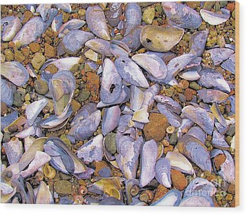 Periwinkles Muscles And Clams Wood Print