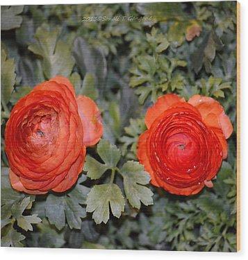 Persian Buttercups Wood Print by Sonali Gangane