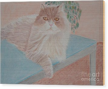 Persian Cat Wood Print by Cybele Chaves