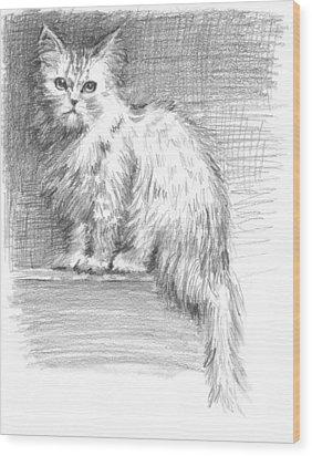 Persian Cat Wood Print by Sarah Parks