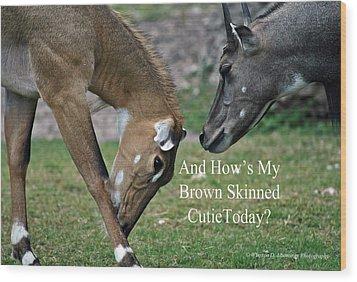 Nilgai Antelope Wood Print