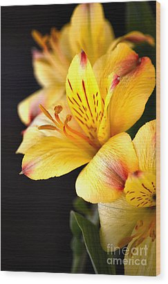 Peruvian Lily Wood Print by Deb Halloran
