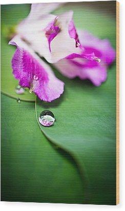 Peruvian Lily Raindrop Wood Print by Priya Ghose