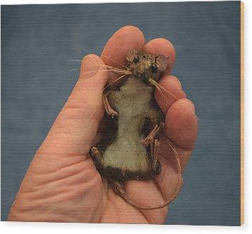 Pet Mouse Wood Print by Roger Swezey