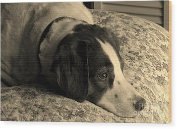Wood Print featuring the photograph Pet Portrait-waiting For Mom by Laura  Wong-Rose