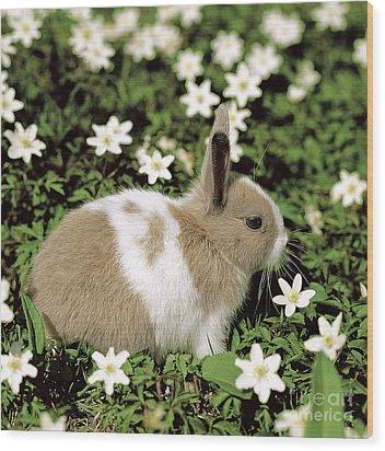 Pet Rabbit Wood Print by Hans Reinhard/Okapia