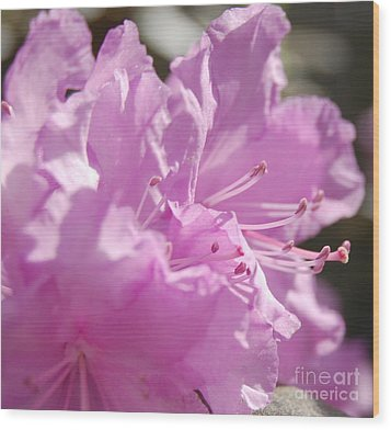 Petal Pink By Jrr Wood Print by First Star Art