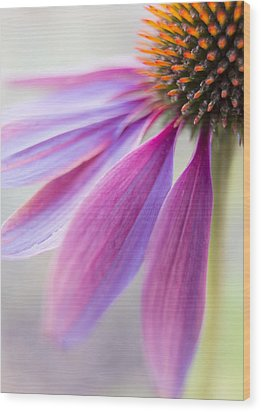 Petal Pink Wood Print