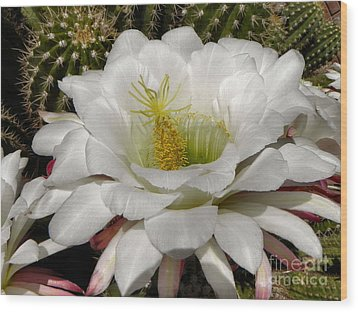 Wood Print featuring the photograph Petals And Thorns by Deb Halloran