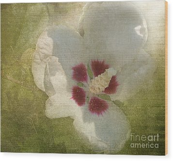 Petals In Shadows Wood Print by Kathi Mirto