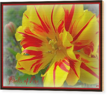 Wood Print featuring the photograph Petals Of Fire by Heidi Manly