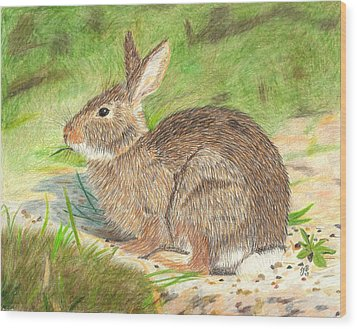 Peter Cottontail Wood Print