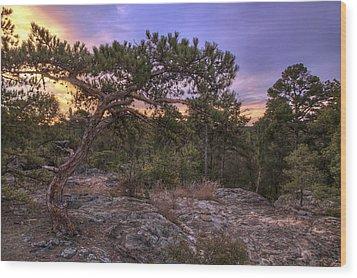 Petit Jean Mountain Bonsai Tree - Arkansas Wood Print