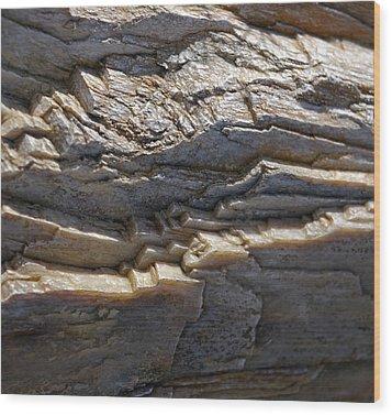 Petrified Wood  Wood Print by Christine Burdine