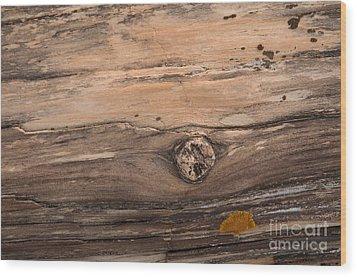 Petrified Wood Detail Wood Print by Vivian Christopher
