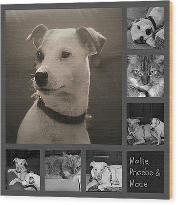 Pets Collage Wood Print by Carolyn Ricks