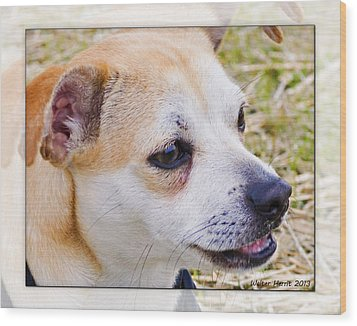 Pets Wood Print