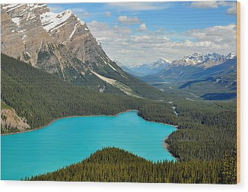 Peyto Lake Wood Print by Lisa Phillips
