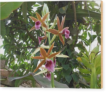Phaius Orchids Wood Print by Kay Gilley