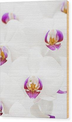 Phalaenopsis Wood Print by Anne Gilbert